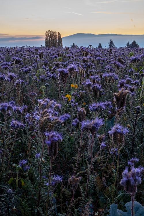 couleurs-violet-identité-paysage